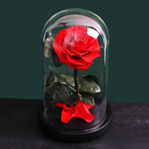 Une Rose Éternelle rouge Sous Cloche
